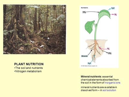 PLANT NUTRITION The soil and nutrients Nitrogen metabolism Mineral nutrients: essential chemical elements absorbed from the soil in the form of inorganic.