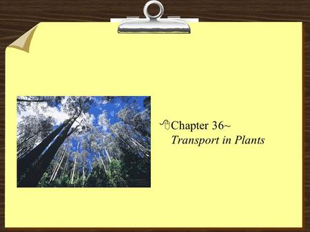 8Chapter 36~ Transport in Plants. Transport Overview 81- uptake and loss of water and solutes by individual cells (root cells) 82- short-distance transport.