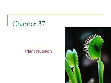 Chapter 37 Plant Nutrition.