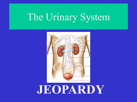 The Urinary System JEOPARDY To Pee or Not to Pee… Gee Whiz Starts With Pee Soup Pee is For Parts Final Jeopardy! #1 #2 #3Final Jeopardy! #1 #2 #3 Pee.