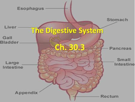 The Digestive System Ch. 30.3. Feed Me! Digestive system uses mechanical and chemical energy to break organic material Digestive system uses mechanical.