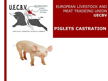 EUROPEAN LIVESTOCK AND MEAT TRADEING UNION UECBV PIGLETS CASTRATION.
