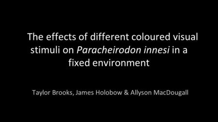 The effects of different coloured visual stimuli on Paracheirodon innesi in a fixed environment Taylor Brooks, James Holobow & Allyson MacDougall.