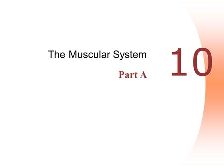 10 The Muscular System Part A. Interactions of Skeletal Muscles  Skeletal muscles work together or in opposition  Muscles only pull (never push)  As.