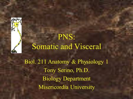 PNS: Somatic and Visceral Biol. 211 Anatomy & Physiology 1 Tony Serino, Ph.D. Biology Department Misericordia University.