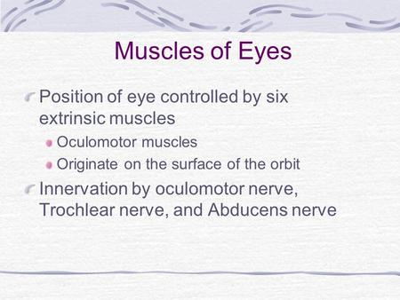 Muscles of Eyes Position of eye controlled by six extrinsic muscles
