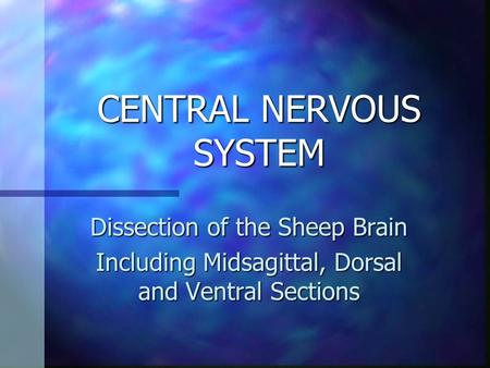 CENTRAL NERVOUS SYSTEM Dissection of the Sheep Brain Including Midsagittal, Dorsal and Ventral Sections.