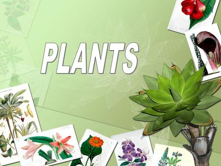 TABLE OF CONTENTS: What will we be learning today? The six parts of a plant -roots - seed - stem -leaves -flowers -fruit What three resources a plant.
