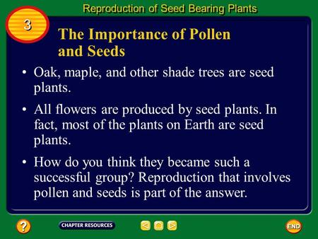 The Importance of Pollen and Seeds Oak, maple, and other shade trees are seed plants. All flowers are produced by seed plants. In fact, most of the plants.