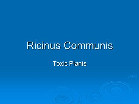 Ricinus Communis Toxic Plants. INTRODUCTION  The seeds from the castor bean plant, Ricinus communis, are poisonous to people, animals and insects. One.