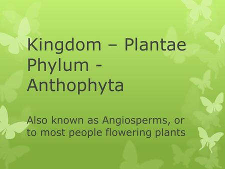 Kingdom – Plantae Phylum - Anthophyta Also known as Angiosperms, or to most people flowering plants.