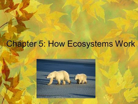 Chapter 5: How Ecosystems Work. 5-1 Life Depends on the Sun Photosynthesis: process by which plants, algae, and some bacteria use sunlight, carbon dioxide,