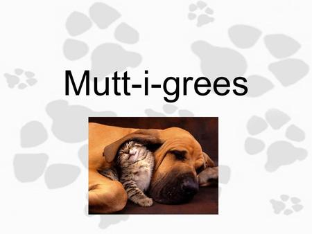Mutt-i-grees 1.2 Getting to Know You Objective: Today you will identify physical, behavioral and emotional traits and defining the characteristics of.