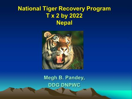 the action of tiger conservation Wwf is a key player in global tiger conservation in 2010, when tiger numbers were at an all-time low, governments of the 13 tiger range countries decided innovative conservation efforts were needed they committed to an ambitious and visionary goal: tx2 – to double wild tigers by 2022.