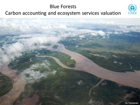 Blue Forests Carbon accounting and ecosystem services valuation © J Tamelander.