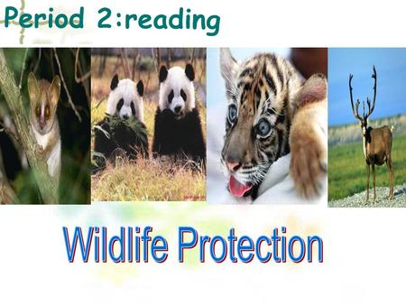 Period 2:reading. Summary * A story of Daisy How Daisy learned to help wildlife **Some new words & useful expressions.