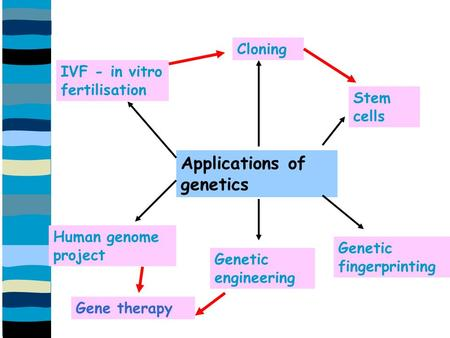 Applications of genetics Cloning IVF - in vitro fertilisation Stem cells Genetic fingerprinting Genetic engineering Human genome project Gene therapy.