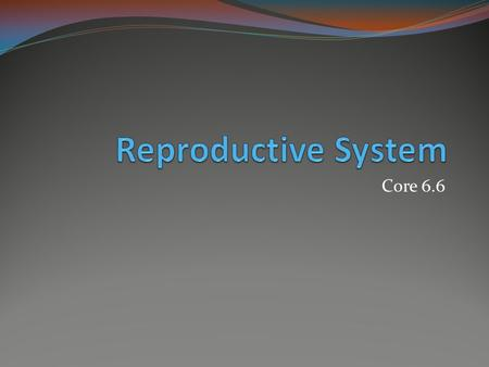 Reproductive System Core 6.6.