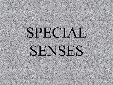 1 SPECIAL SENSES. 2 Special Senses General Senses receptors that are widely distributed throughout the body skin, various organs, and joints receive stimulation.