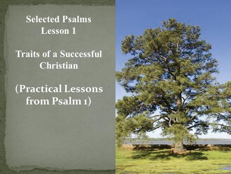 Selected Psalms Lesson 1 Traits of a Successful Christian (Practical Lessons from Psalm 1)