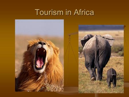 Tourism in Africa. African Safari In the 70's and early 80's, Kenya developed its safari industry In the 70's and early 80's, Kenya developed its safari.