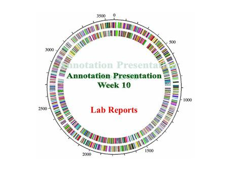Lab Reports. Wrapping up IMG-ACT Genome Annotation Online notebook should be completed for all 3 genes Final reports are comprised of the imgACT online.