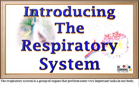 The respiratory system is a group of organs that perform some very important tasks in our body.