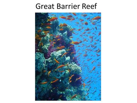 Great Barrier Reef. Red Sea Philippines Hawaii.
