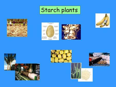 Starch plants. Starch granule in plant cell.