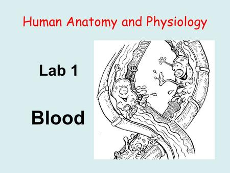 Human Anatomy and Physiology Lab 1 Blood. Background: I. Blood is a connective tissue composed of formed elements (cells and cellfragments) and intercellular.