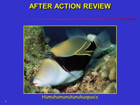 1 AFTER ACTION REVIEW Humuhumunukunukuapua'a. After Action Review.
