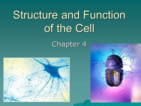 Structure and Function of the Cell Chapter 4. 4.1 Discovering the cell…   1665 – Hooke looked at plants under the microscope and saw little boxes –