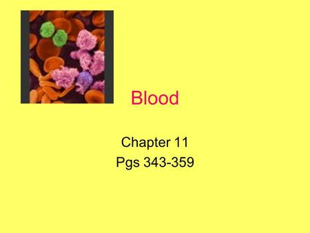 Blood Chapter 11 Pgs 343-359. Overview Functions of Blood Composition of Blood Plasma –Plasma proteins Formed Elements –Production of formed elements.