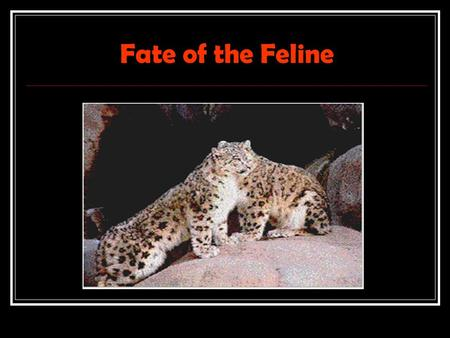 Fate of the Feline. The Snow Leopard Fast Facts Type: Mammal Diet: Carnivore Size: 4 to 5 ft (1.2 to 1.5 m); Tail, 36 in (91 cm) Weight: 60 to 120 lbs.