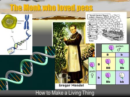 The Monk who loved peas How to Make a Living Thing.