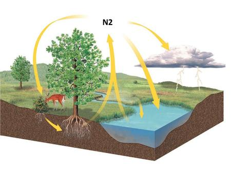 N2 Nitrogen Cycle What is the NITROGEN CYCLE? The atoms of nitrogen moves from the atmosphere to the soil, through plants and animals, and back into.