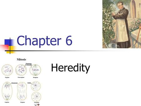 Chapter 6 Heredity. Section 1: Mendel and His Peas Humans share common characteristics i.e. feet, eyes, hands, etc. But what makes you different than.
