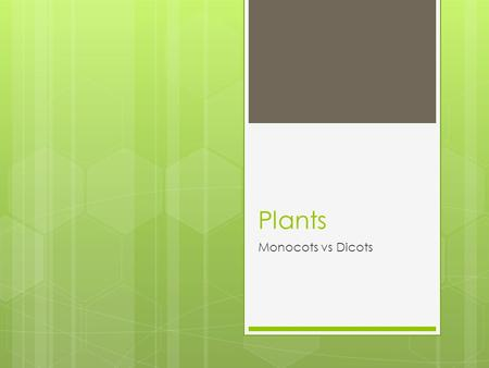 Plants Monocots vs Dicots. Seed Monocots have one thin leaf inside the seed coat and it DOES NOT encompass the endosperm  Dicots have TWO seed leaves.