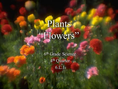 "<strong>Plants</strong> ""Flowers"" 6 th <strong>Grade</strong> Science 4 th Quarter 6.L.1 6 th <strong>Grade</strong> Science 4 th Quarter 6.L.1."