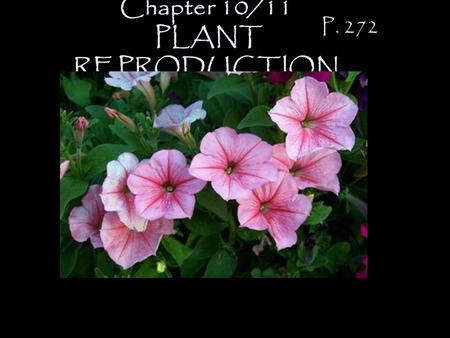 Chapter 10/11 PLANT REPRODUCTION P. 272 Growing Seasons: 1) annual -lives one growing season. ex. petunia ex. marigold.