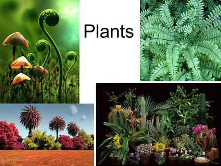Plants. Plant Diversity About 280,000 species of plants have been identified By total mass, plants are the dominant organisms on Earth Common features.