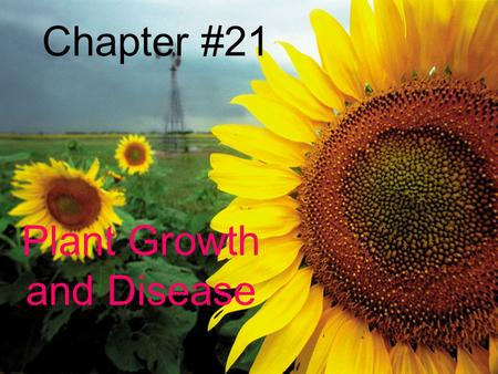 Chapter #21 Plant Growth and Disease. Chapter 21.1 Notes Plant growth happens at the root tips and stem tips. Plants only grow longer and taller.