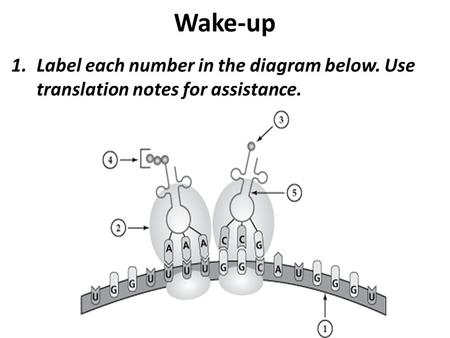 Wake-up Label each number in the diagram below. Use translation notes for assistance.