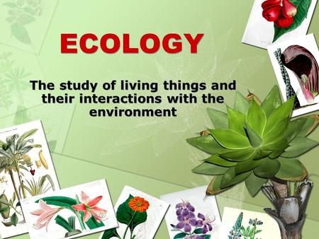 The study of living things and their interactions with the environment