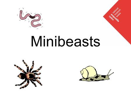 Minibeasts. What is a minibeast? All of these creatures can be called minibeasts Insects Arachnids (spiders) Crustaceans (woodlice) Myriapods (centipedes/