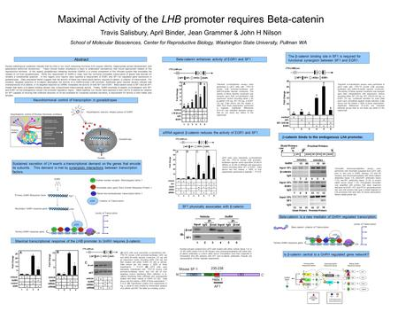 Abstract Maximal Activity of the LHB promoter requires Beta-catenin Travis Salisbury, April Binder, Jean Grammer & John H Nilson School of Molecular Biosciences,