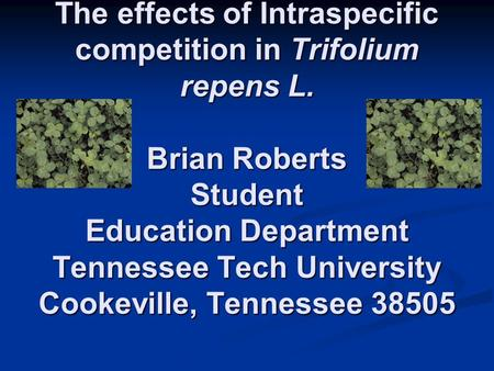 The effects of Intraspecific competition in Trifolium repens L. Brian Roberts Student Education Department Tennessee Tech University Cookeville, Tennessee.