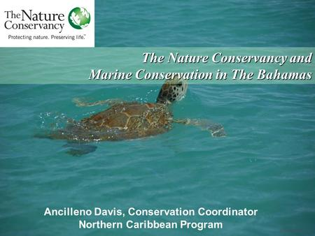 © Carlton Ward, Jr. Ancilleno Davis, Conservation Coordinator Northern Caribbean Program The Nature Conservancy and Marine Conservation in The Bahamas.