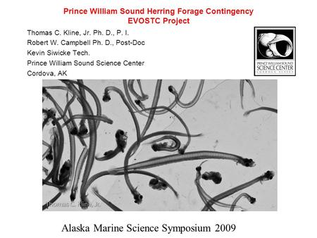 Prince William Sound Herring Forage Contingency EVOSTC Project Thomas C. Kline, Jr. Ph. D., P. I. Robert W. Campbell Ph. D., Post-Doc Kevin Siwicke Tech.