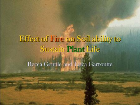 Effect of Fire on Soil ability to Sustain Plant Life Becca Gentile and Erica Garroutte.